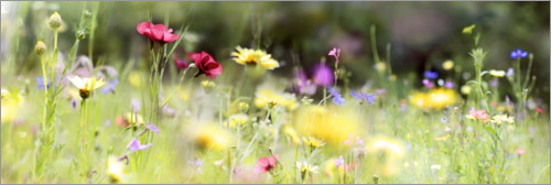 Premium poster Panorama of a wildflower meadow