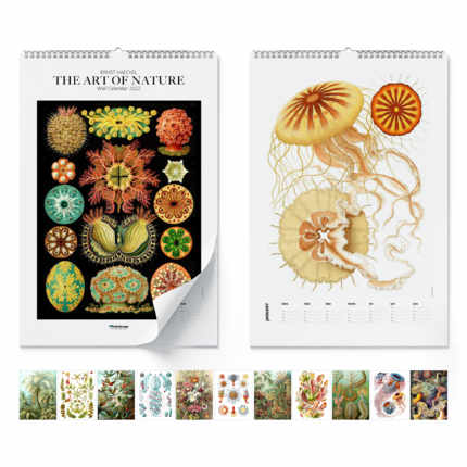 Wandkalender  Ernst Haeckel, The Art Of Nature 2020 - Ernst Haeckel