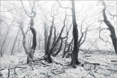 Canvas print  Mystical forest in the snow and fog - The Wandering Soul
