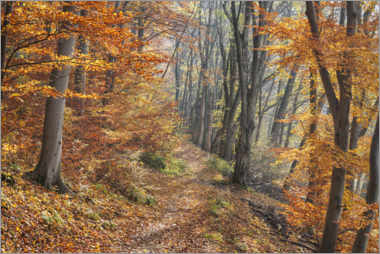 Canvas print  Forest path in late autumn - The Wandering Soul