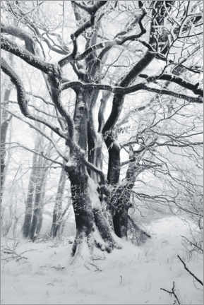 Canvas print  Mystic tree in frost and snow - The Wandering Soul