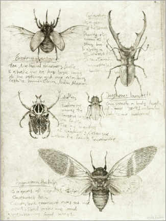 Premium poster Insects