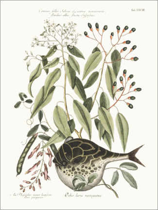 Acrylglas print  Puffer fish and bean plant - Wunderkammer Collection