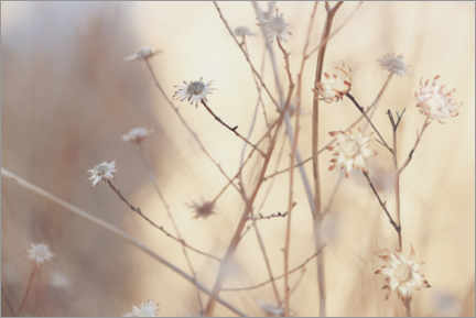 Gallery print  Flowers in the morning light of a foggy day - Carmen Varo