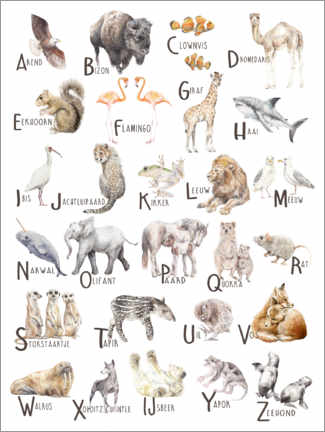 Premium poster  Animals A to Z Alphabet (Dutch) - Wandering Laur