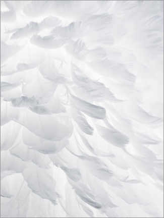 Hout print  Feathers I - Magda Izzard