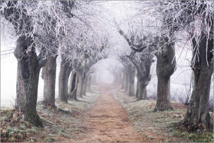 Hout print  Linden avenue in the fog and hoarfrost - The Wandering Soul