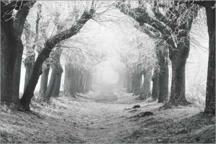Aluminium print  Linden avenue on a winter morning - The Wandering Soul