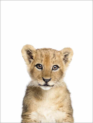Acrylglas print  Baby lion - Sisi And Seb
