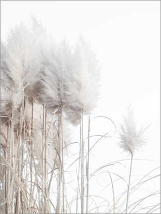 Gallery print  Pampas grass II - Magda Izzard