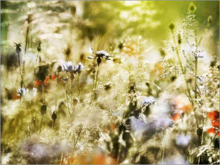 Premium poster Magical wildflower meadow