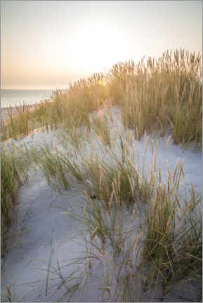 Acrylglas print  Morning sun in the dunes on Sylt - Christian Müringer
