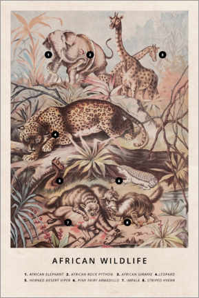 Acrylglas print  African wildlife (vintage) - Wunderkammer Collection