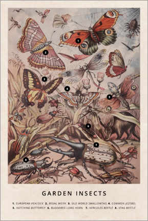 Acrylglas print  Garden insects - Wunderkammer Collection