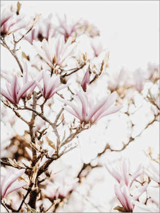 Canvas print  Spring time - Magda Izzard