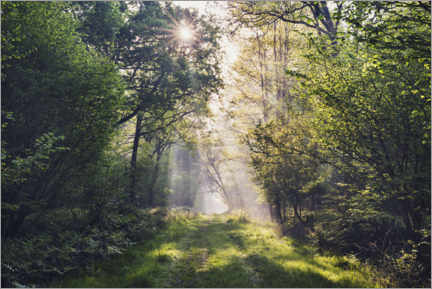 Gallery print  Forest path with rays of light at sunrise - The Wandering Soul