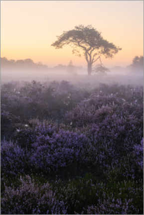Premium poster Blooming heather on Oude Buisse Heide