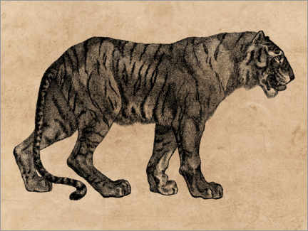Canvas print  The Tiger - Wunderkammer Collection