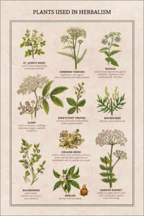 Canvas print  Medicinal plants (English) - Wunderkammer Collection
