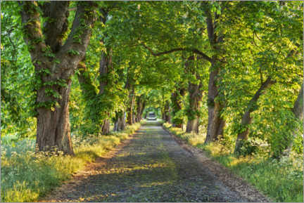 Canvas print  Chestnut avenue in spring - The Wandering Soul