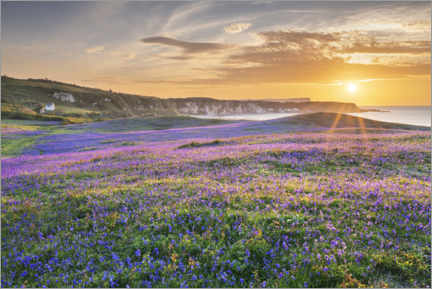 Hout print  Sea of flowers on the coast of Ireland at sunset - The Wandering Soul