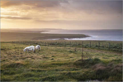 Canvas print  Sheeps by the sea at sunset in Scotland - The Wandering Soul