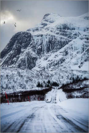 Premium poster Road in Lofoten, Norway