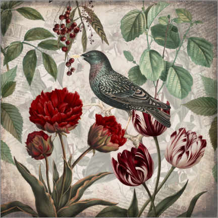 Canvas print  Vintage starling with tulips - Andrea Haase
