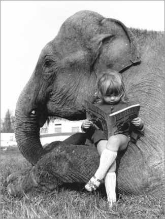 Acrylglas print  Girl sits on elephant and reads - John Drysdale
