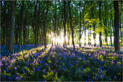 Muursticker  Bluebell Woods in spring - Matthew Williams-Ellis