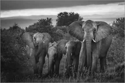 Gallery print  A famille of African elephants - Matthew Williams-Ellis