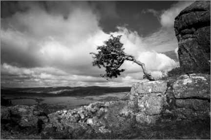 Hout print  Windswept tree in Dartmoor, England - Matthew Williams-Ellis