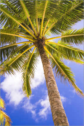 Acrylglas print  Tropical palm tree under the clear sky - Matthew Williams-Ellis