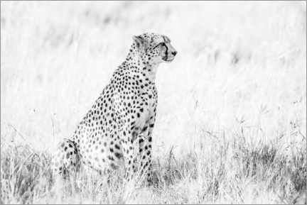 Canvas print  Cheetah- African wildlife - Matthew Williams-Ellis