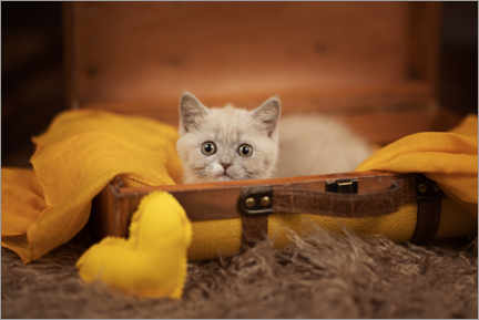 Premium poster  Kitten with a heart lies in the suitcase - Janina Bürger