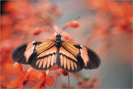 Premium poster  Colorful butterfly - Janina Bürger