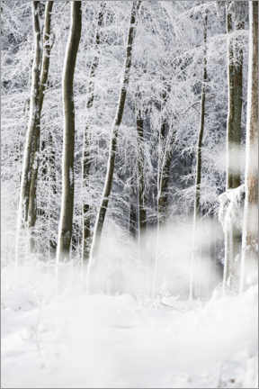 Premium poster Trees in the snow