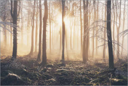 Premium poster Morning light incidence in frost and fog in the beech forest