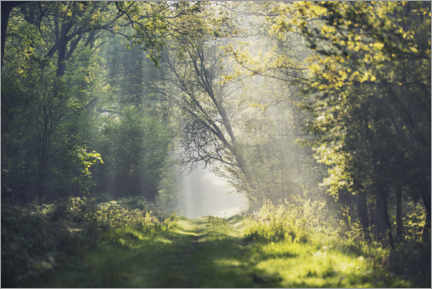 Muursticker  Fantastic forest path in the morning light - The Wandering Soul