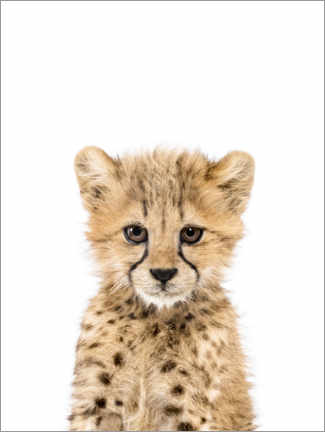 Canvas print  Baby Cheetah - Sisi And Seb
