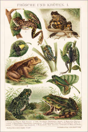 Acrylglas print  Frogs and toads