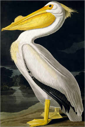 Canvas print  Amerikaanse witte pelikaan van Birds of America - John James Audubon