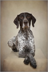 Gallery print  German shorthaired pointer / 1 - Heidi Bollich