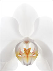 Muursticker  in the throat of the Orchid - GAVIN KINGCOME