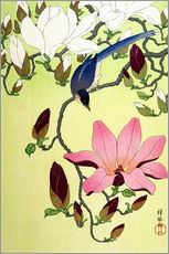 Gallery print  Magpie with Pink and White Magnolia Blossoms - Ohara Koson