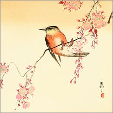 Muursticker  Red Bird and Cherry Blossoms - Ohara Koson