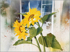 Gallery print  Sunflowers - Franz Heigl