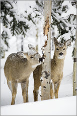 Gallery print  Deers in a winter forest - Michael Interisano