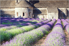 Muursticker  Famous Senanque abbey with its lavender field, Provence, France - Matteo Colombo