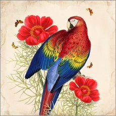 Gallery print  Oh My Parrot III - Mandy Reinmuth